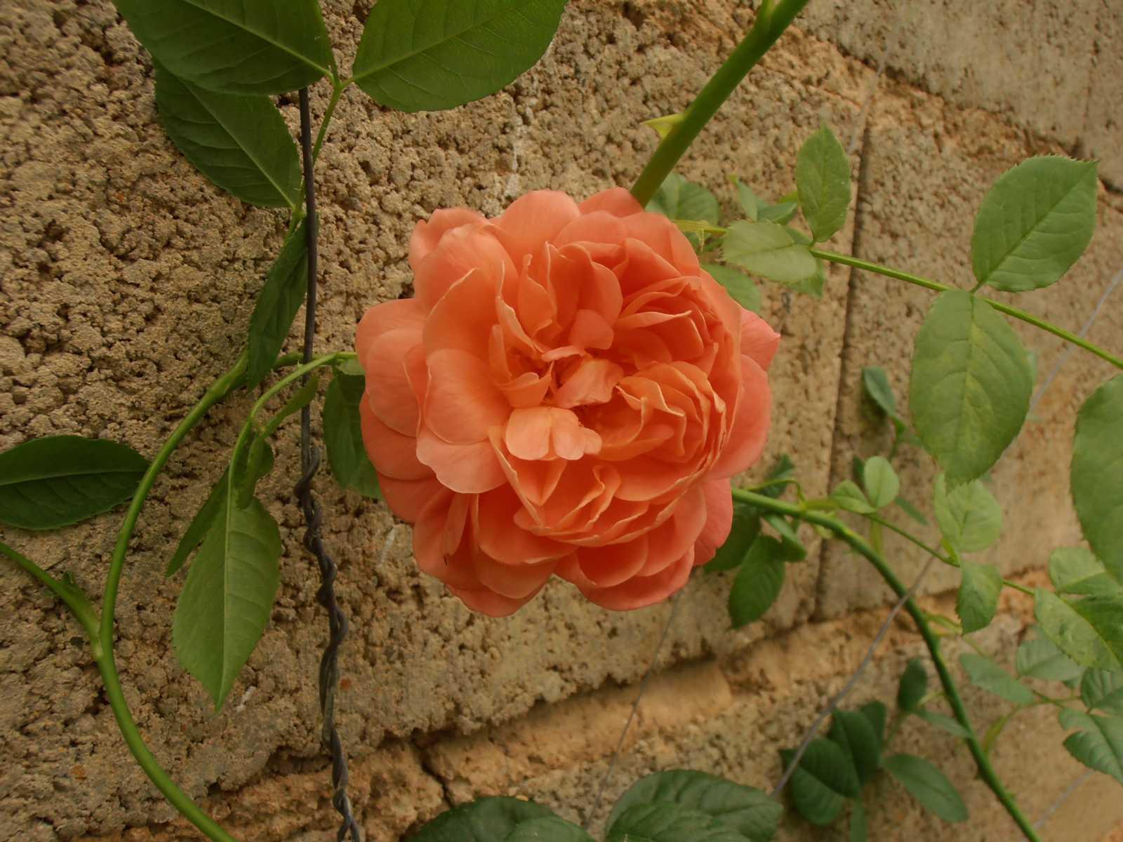 Jdv1373932888r jpg 1600 1200 roses pinterest for Infos jardin