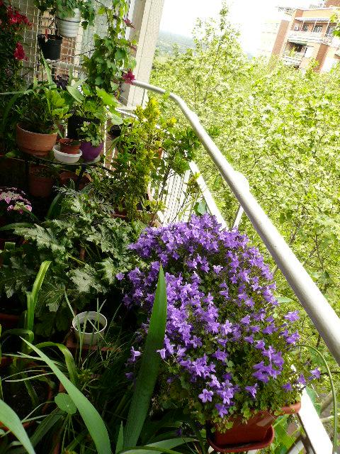 Flores todo el a o meses de abril y mayo en espa a y for Plantas de balcon para todo el ano