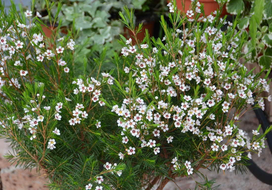 Una bonita planta ornamental for Una planta ornamental