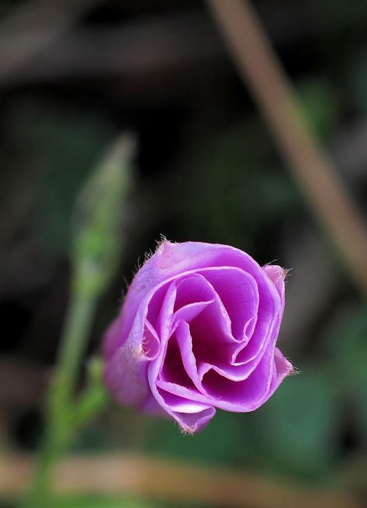 Florecilla Bfi1354650072x