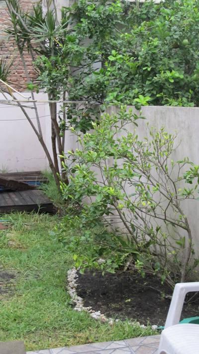 Ayuda para dise ar mi jard n argentina p gina 19 - Disenar mi jardin ...
