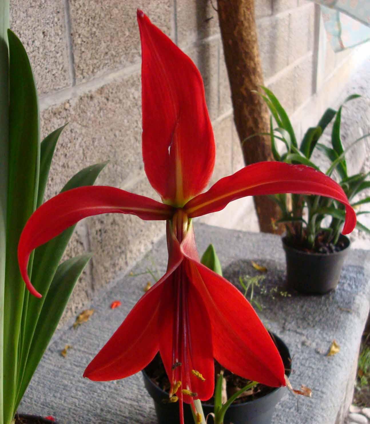Venta de planta esquejes y semillas de diferentes especies - Planta cuna de moises ...