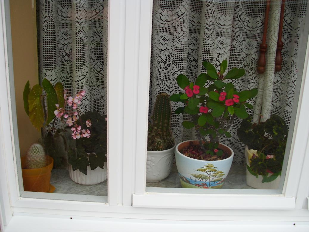 Plantas de interior que no necesiten excesivos cuidados for Plantas de interior que no necesitan luz