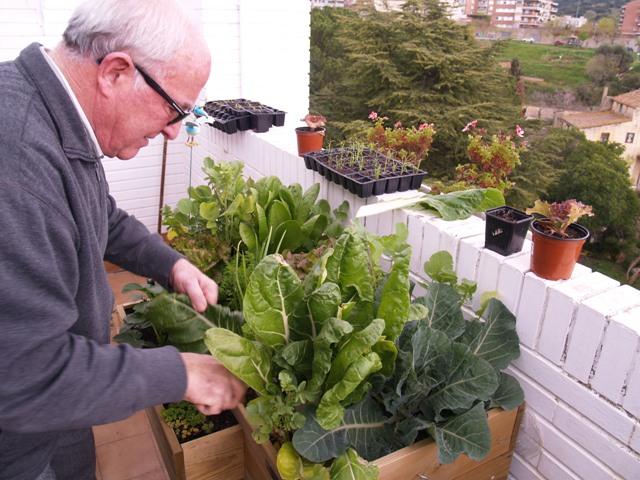 Fotos del huerto ecol gico de mi terraza for Cultivo pimiento huerto urbano