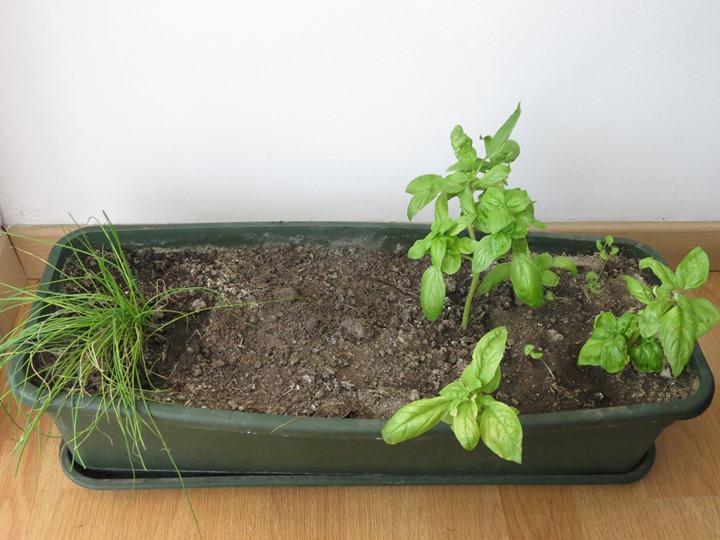 Hierbas arom ticas y medicinales que cultivamos for Hierbas aromaticas y medicinales