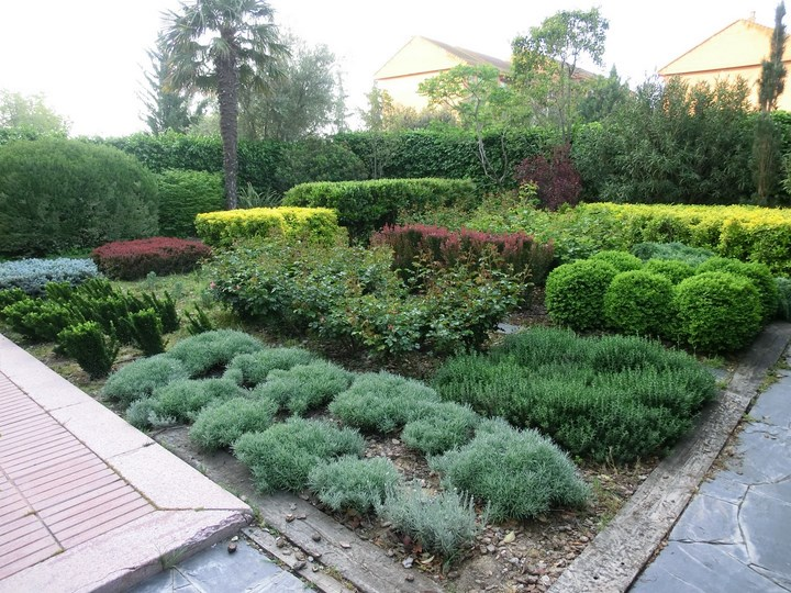 Fotos de mi jard n de rosales y arbustos p gina 9 - Arbustos de jardin ...