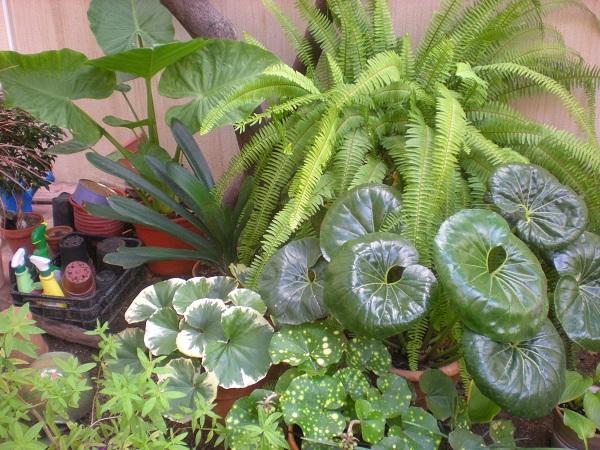 Fotos de jardines y plantas de sombra infojardin home - Plantas de sombra para jardin ...